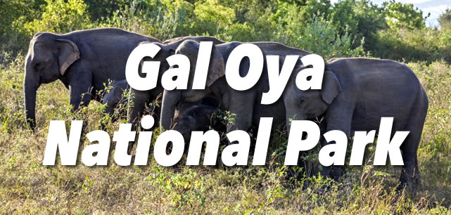 Gal Oya National Park Guide