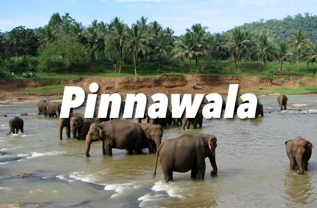Pinnawala Elephant Orphanage Guide