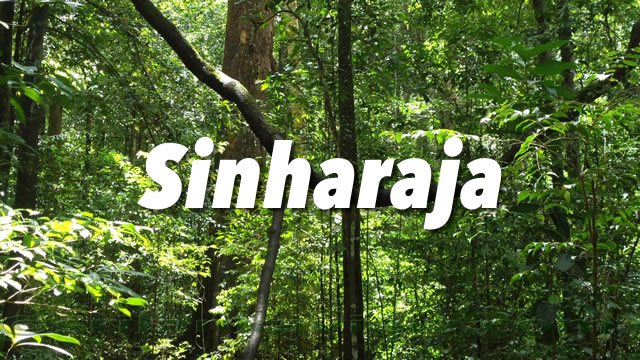 Sinharaja Rain Forest Guide