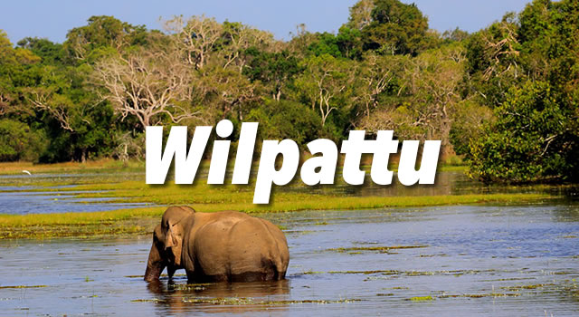 Wilpattu Activities