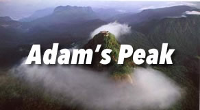 Adam's Peak Hotels